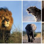10_things_all_south_afrians_love_about_coming_home_wildlife