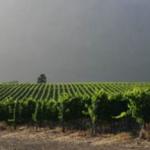 sustainable-wine-making-3-sa-good-news