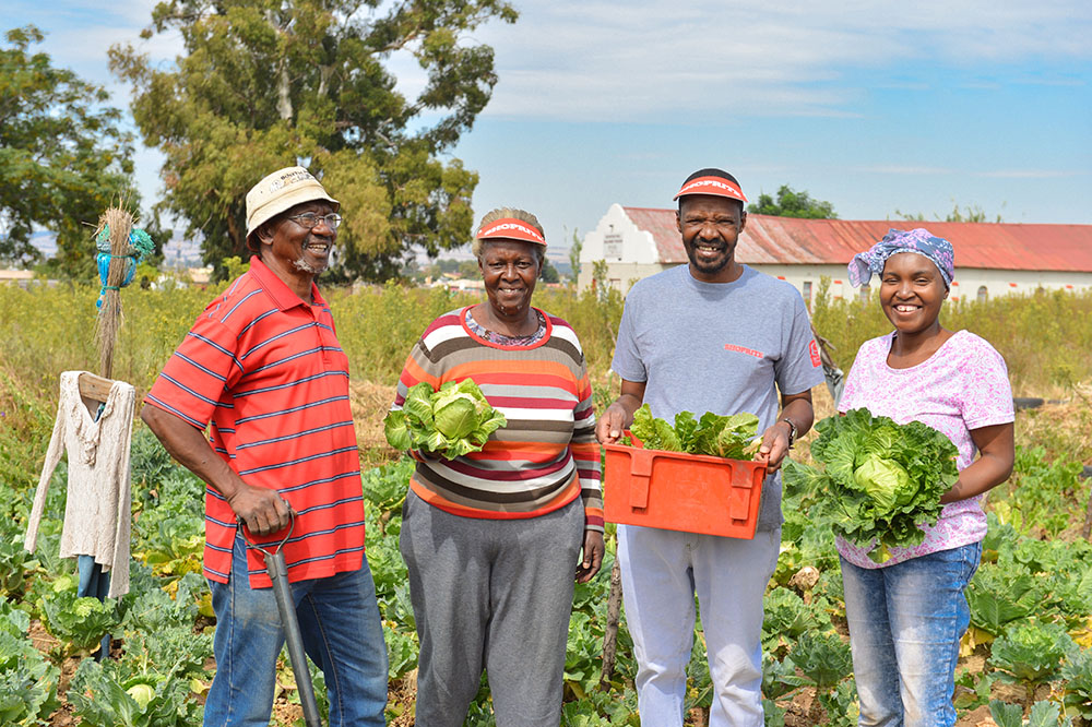 sa good news brand south africa garden eldorado park - Working in harmony with nature makes for a successful food garden