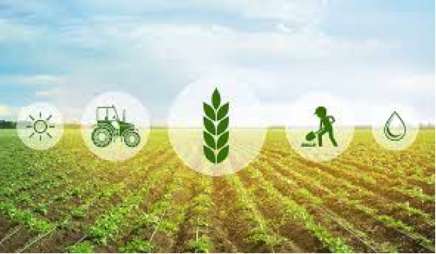 sa good news brandsa agriculture recovery - Optimistic outlook for agriculture